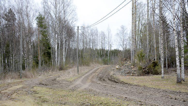 Karkjärven kuntoradan remontti aloitettiin järeimpien, rataa varjostaneiden puiden kaatamisella. Kuva Anna Karhila.